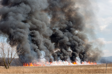 Prescribed burn in the Busse Woods Forest Preserve 3/31/15 conducted by the Forest Preserve District of Cook County Resource Management Department firefighters Larry Shapiro photographer shapirophotography.net